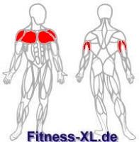 Bankdrücken - Übung, Ausführung und beanspruchte Muskeln