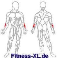 Muskelskizze Unterarme