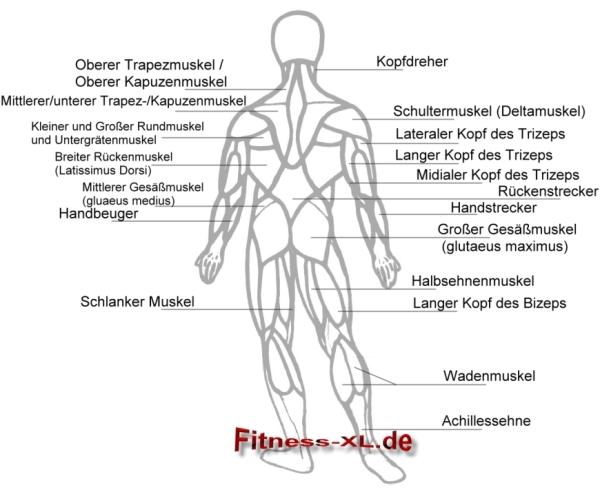 Anatomie Rückseite