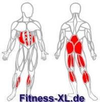 Beinbeugen Muskeln