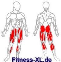 Beinmuskeln