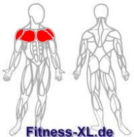 Brusttraining: Flys / Fliegende