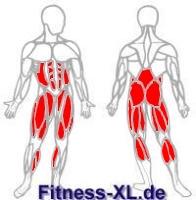 Kniebeugen - trainierte Muskeln