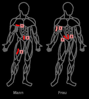 Hautfaltenmessung – Körperfettberechnung mit der 3 Falten Messung