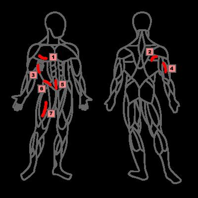 Hautfaltenmessung – Körperfettberechnung mit der 7 Falten Messung