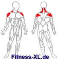 Seitehenheben - Muskeln