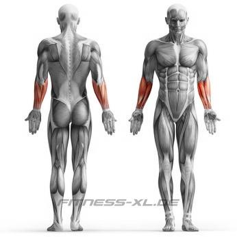 Unterarmmuskeln