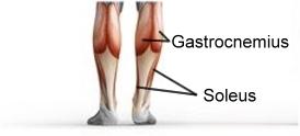 Wadenheben stehend Muskelzkizze