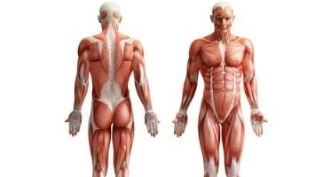 Ganzkörper Trainingsplan Beispiele
