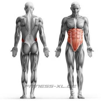 Muskelskizze Crunch seitlich - Training für die seitlichen Bauchmuskeln