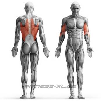Muskelskizze beanspruchte Muskeln beim Latzug