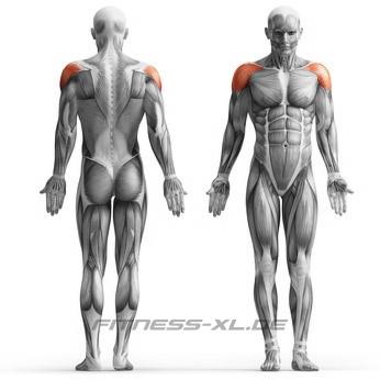 Schultermuskeln - Schultertraining - Seitheben - beanspruchte Muskeln